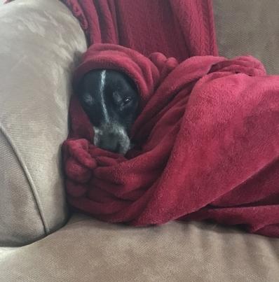 ace-in-blanket.jpeg