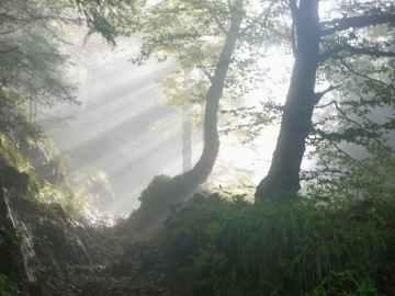branch dawn environment fall