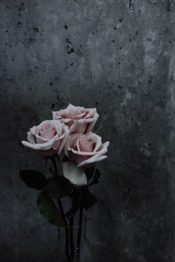 priscilla-du-preez-1357655-unsplash pink rose