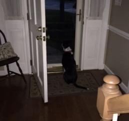 Ace at door